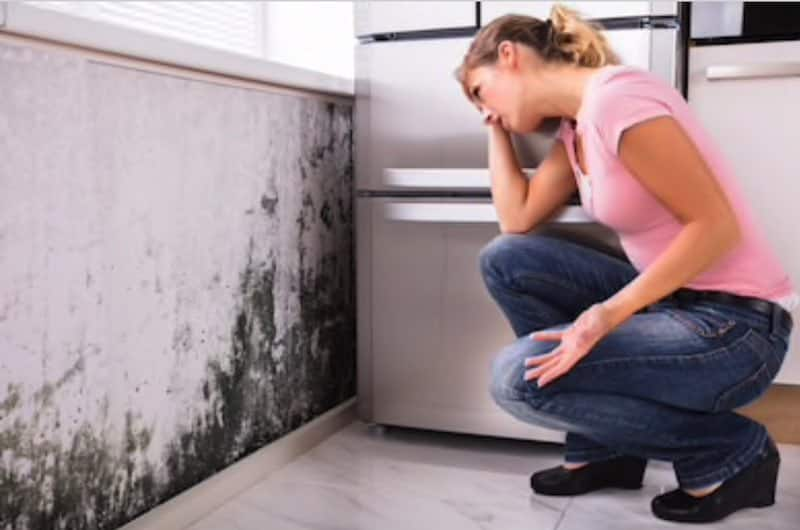 What You Have Mold Your House Humiditycheck